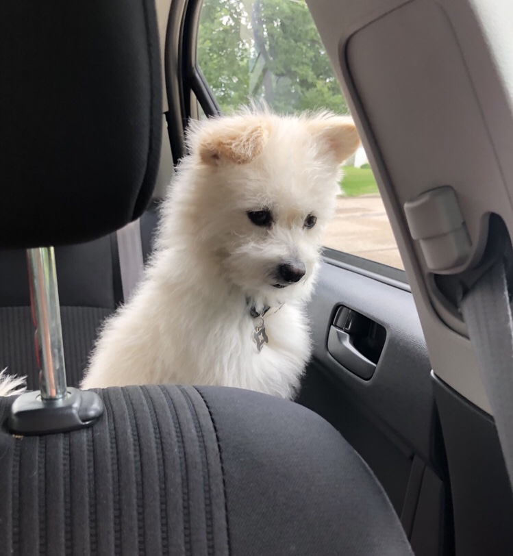 waiting for the window to open
