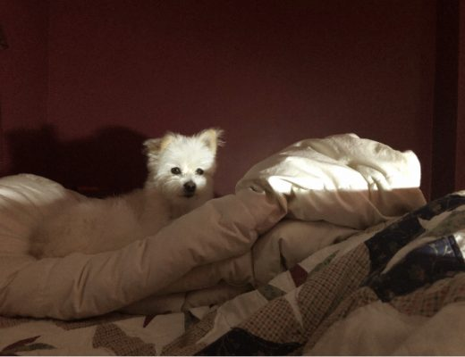 white puppy on white down comforter