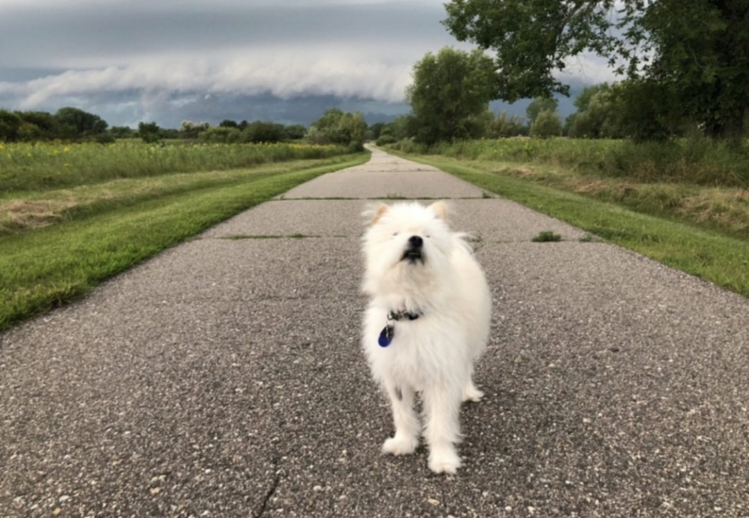 dog sniffing the air before a storm